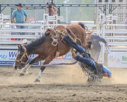 2018 CPRA Cochrane Aug11 - Saddle BroncB 325   by calgarypolicerodeophotos