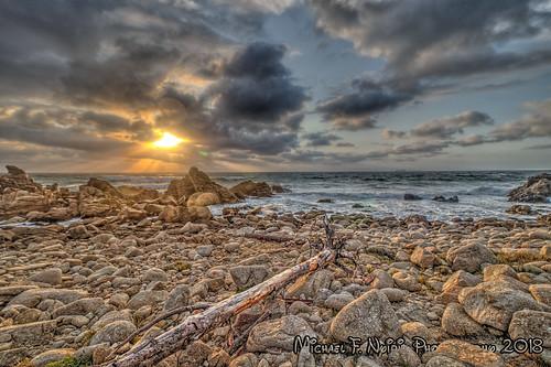 pebblebeach northerncalifornia rockyshore tree sunset colors
