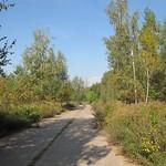 Pfad mit Hänge-Birken (Betula pendula) in der Dellbrücker Heide