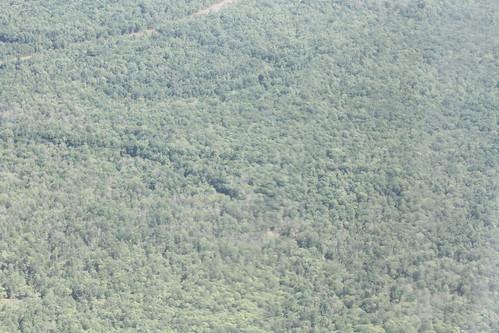 atchafalaya landowner