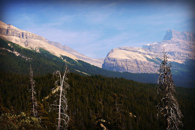 Views from Icefield Parkway