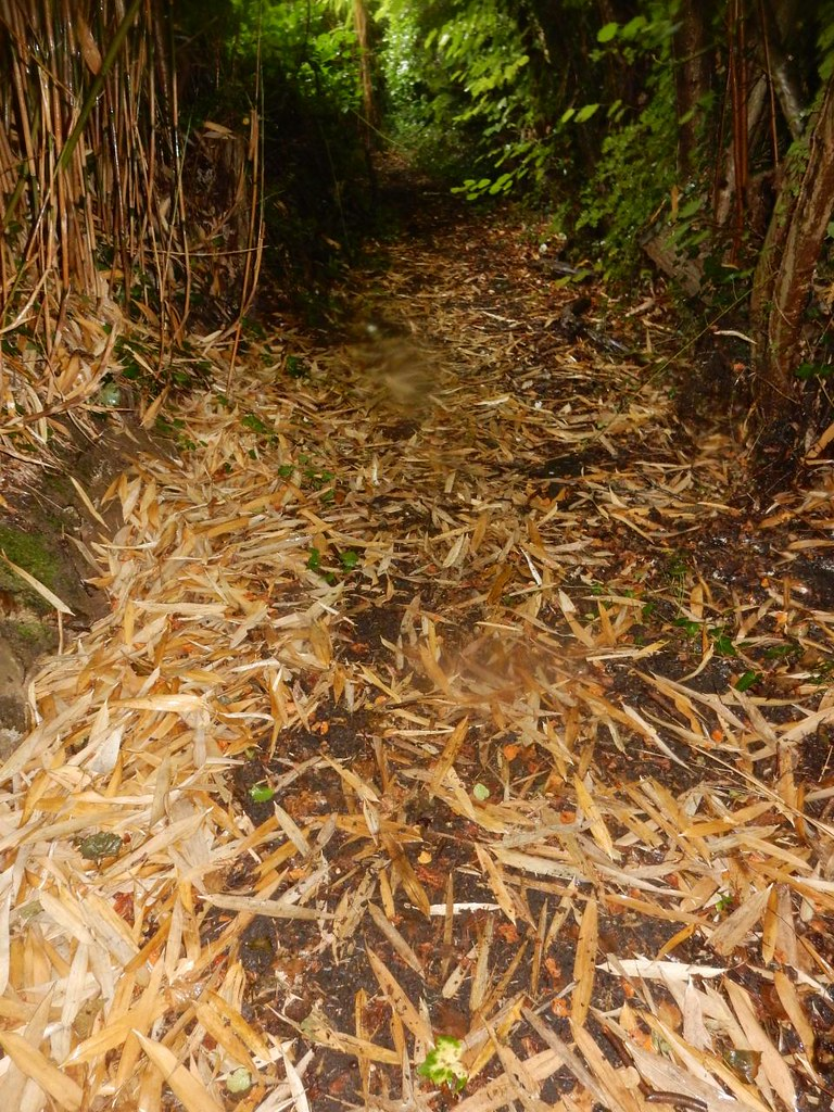 Bamboo leaves Wanborough to Godalming