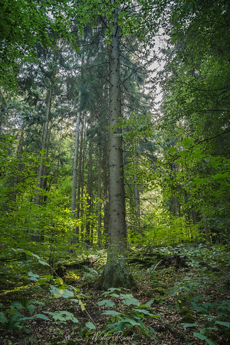 Sauerland7 | by walter.roost