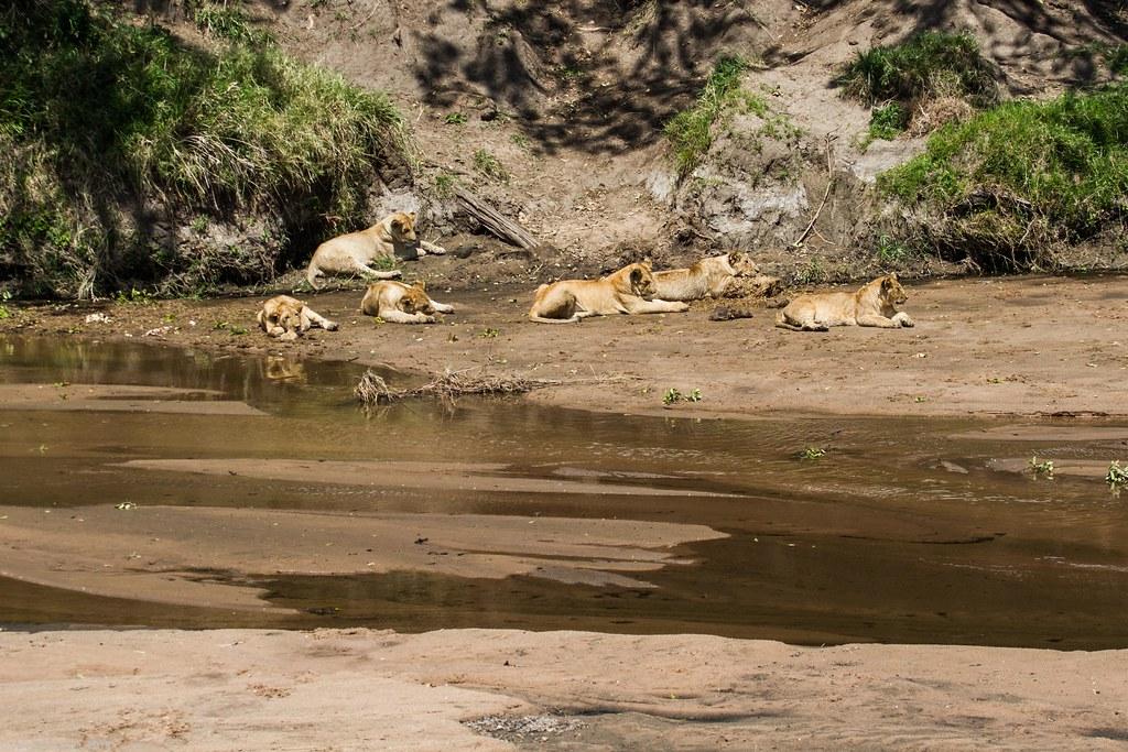 Maasai Mara_13sep18_14_familie de lei