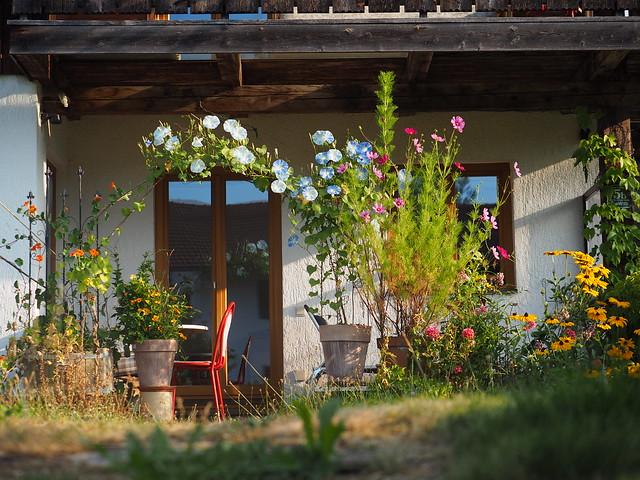 Sommer Blumen Garten Blüten © Summer Flower Garden Blossom ©