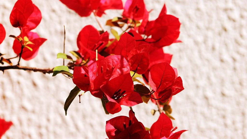 flores de um jardim