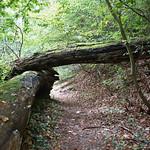 Mancherorts im NSG Oefter Tal muss man unter umgestürzten Bäumen hindurch laufen
