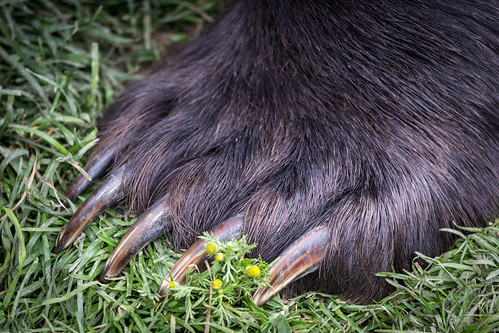 Claws of the Bear | by Alex E. Proimos