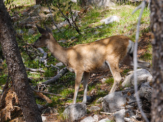 One of many deer friends   by snackronym