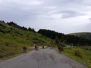 Drumul din Valea Doftanei spre Secaria | by mergpemunte.ro