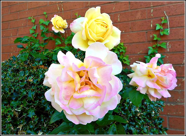 Four Roses ...