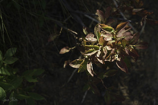 Sunlit | by Trail Image