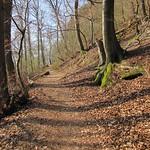 In Serpentinen windet sich der Rheinsteig den Drachenfels empor