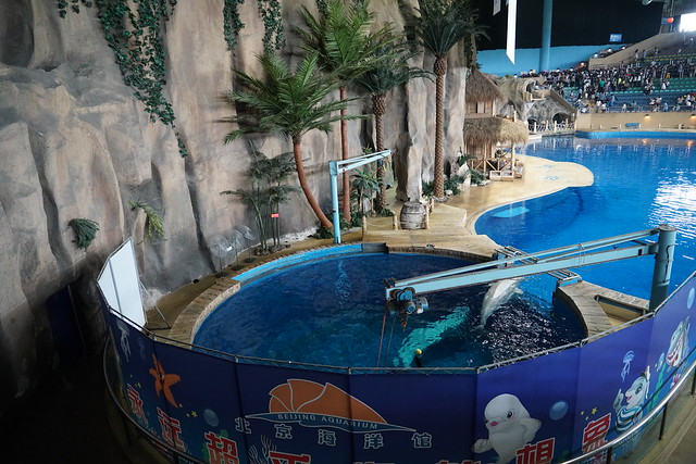 2017 CCA investigation into Beijing Aquarium