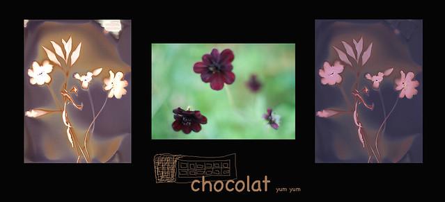 chocolate cosmos...