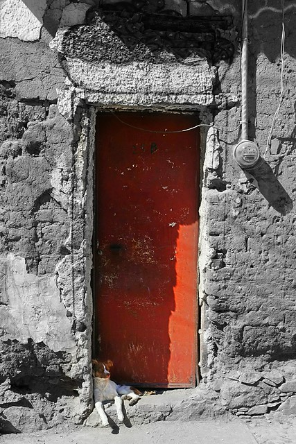Dog in doorway