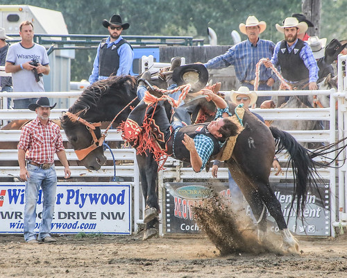 2018 CPRA Cochrane Aug11 - Saddle BroncB 317 | by calgarypolicerodeophotos