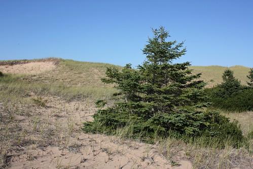 greenwich pei canada dunes sanddunes trees nationalpark