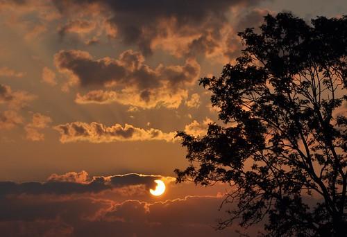 zonlicht zonsopkomst zon sunlight sunrise sun sky clouds wolken boom tree ochtendzon morningglory morn leverdusoleil solopgang alba sonnenaufgang natuur nature natur naturaleza nikond90 nederland niederlande netherlands holland holanda paysbas paesibassi paísesbajos europa europe été zomer summer sommer outdoor wilmahw61 wilmawesterhoud silhouet silhouette nwn