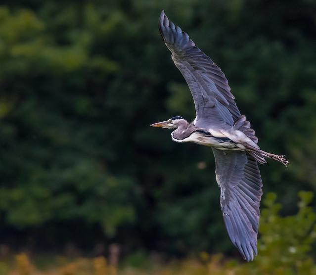 Big Bird :)