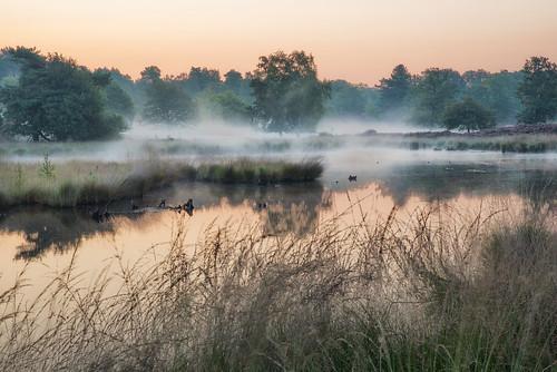 netherlands fog hatertse waterscape morning sunrise peterbijsterveldpictures landscape nikon nikond750 mist
