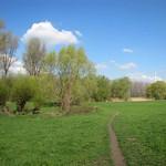 Die Flittarder Rheinaue mit erstem Frühlingsgrün