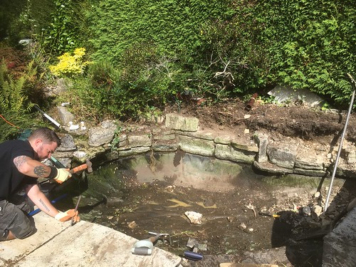 Woodlands pond renovation