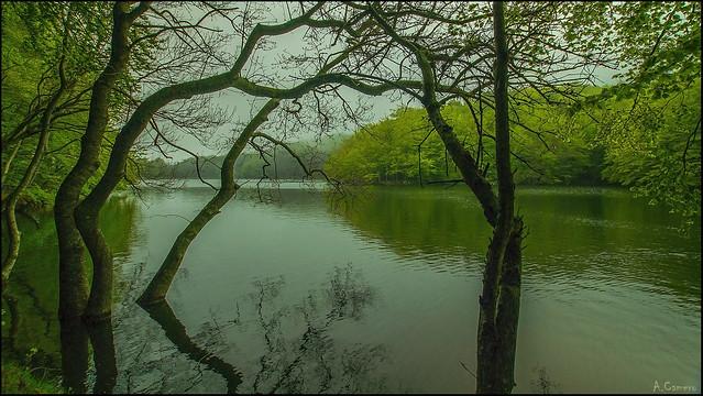 Reflejos en el pantano.