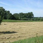 Gemähte Wiese in der Saarn-Mendener Ruhraue