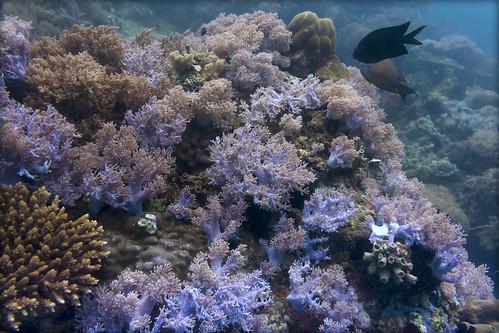 underwater filippines scubadiving diving 2018 дайвинг филиппины corals
