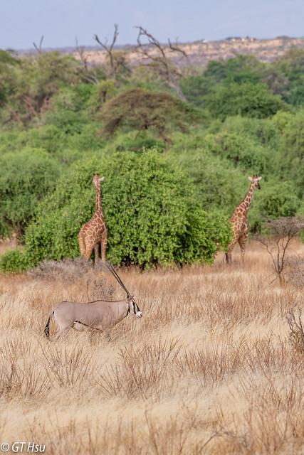 Samburu National Reserve @ 2018.8.23