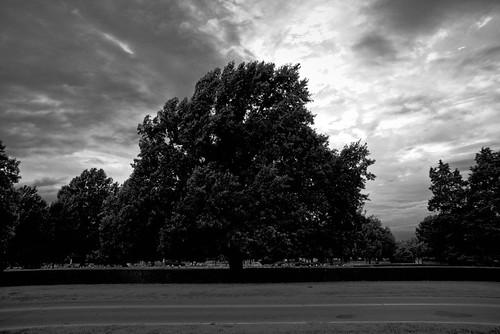 d610 tamron28300xrdiif brokenarrow oklahoma tree graveyard cloudy sunset ononesoftware on1photoraw2018 blackandwhite
