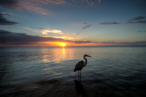 sunset water ocean gulf heron bird gulfcoast emersonpoint palmettoflorida floridasunset gulfsunset