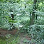 Mit Moos bewachsene Abflussrinne im Naturschutzgebiet Oefter Tal