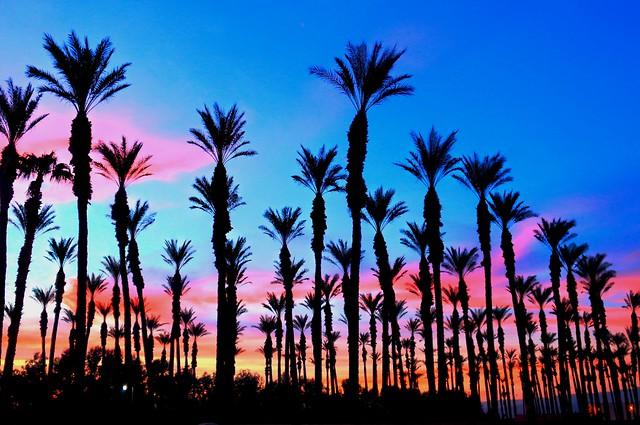 Desert Trees Sunset