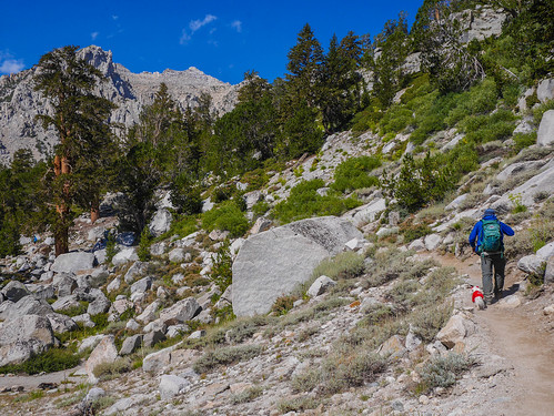 Day hiker with a dog with bows and a shirt on the trail out of Onion Valley | by snackronym