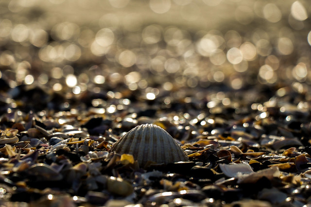 A seashell on the seashore