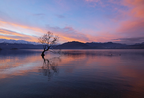 wanaka thatwanakatree wanakatree newzealand amazing travel beautiful sunset mountains alpine incredible canon 2018 tree lake water sky calm tranquil