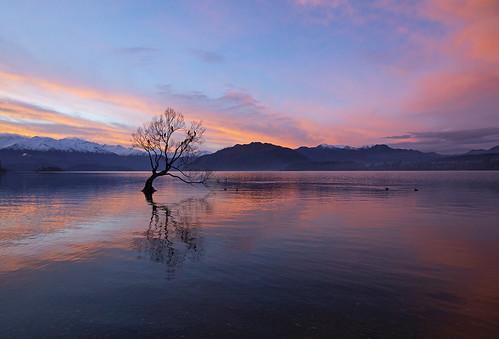 wanaka thatwanakatree wanakatree newzealand amazing travel beautiful sunset mountains alpine incredible canon 2018 tree lake water sky calm tranquil