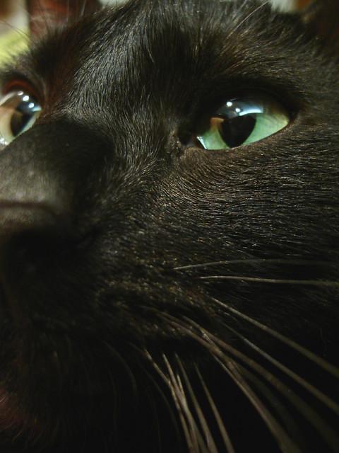Gracie's Beautiful Eyes 4