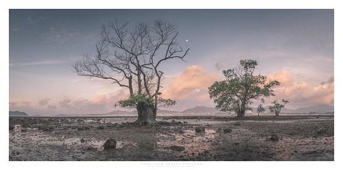 blue khaokhad thailand phuket mangrove moon
