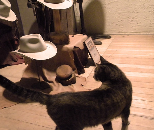Cat in a hat store in Mancos, Colorado
