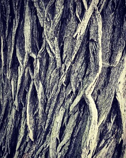 Willow Bark   by blinkenpilzen
