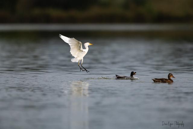 La pêche aux canards !!!