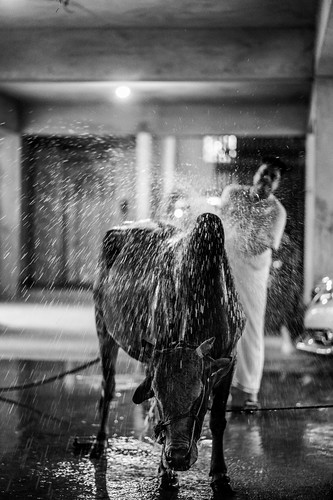 The last bath. | by Ata M Adnan