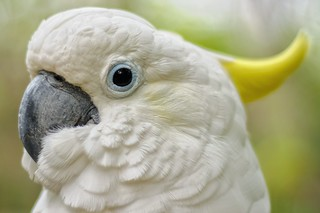 White feather   by Arnold Adikrishna
