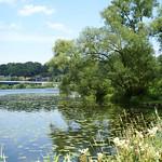 Die Ruhr mit Seerosen und Ufervegetation