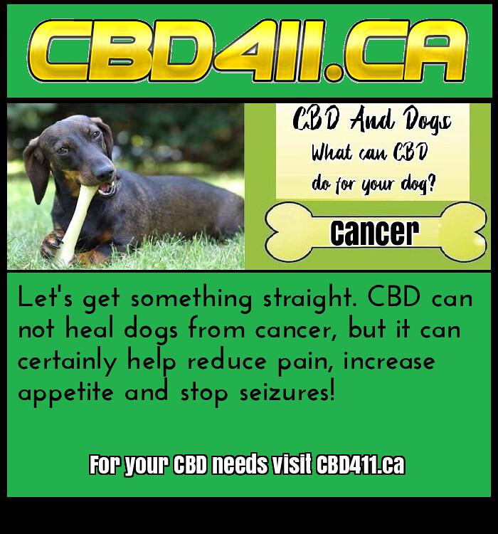 CBD-Dogs-Cancer-(CBD411 ca) | Cbd hemp oil for cancer in dog
