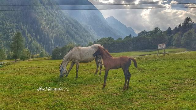 Horse at Pejo , Baita tre Larici