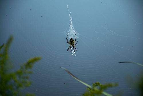 web spider altamont nature ballardnaturecenter effinghamcounty illinois insect places